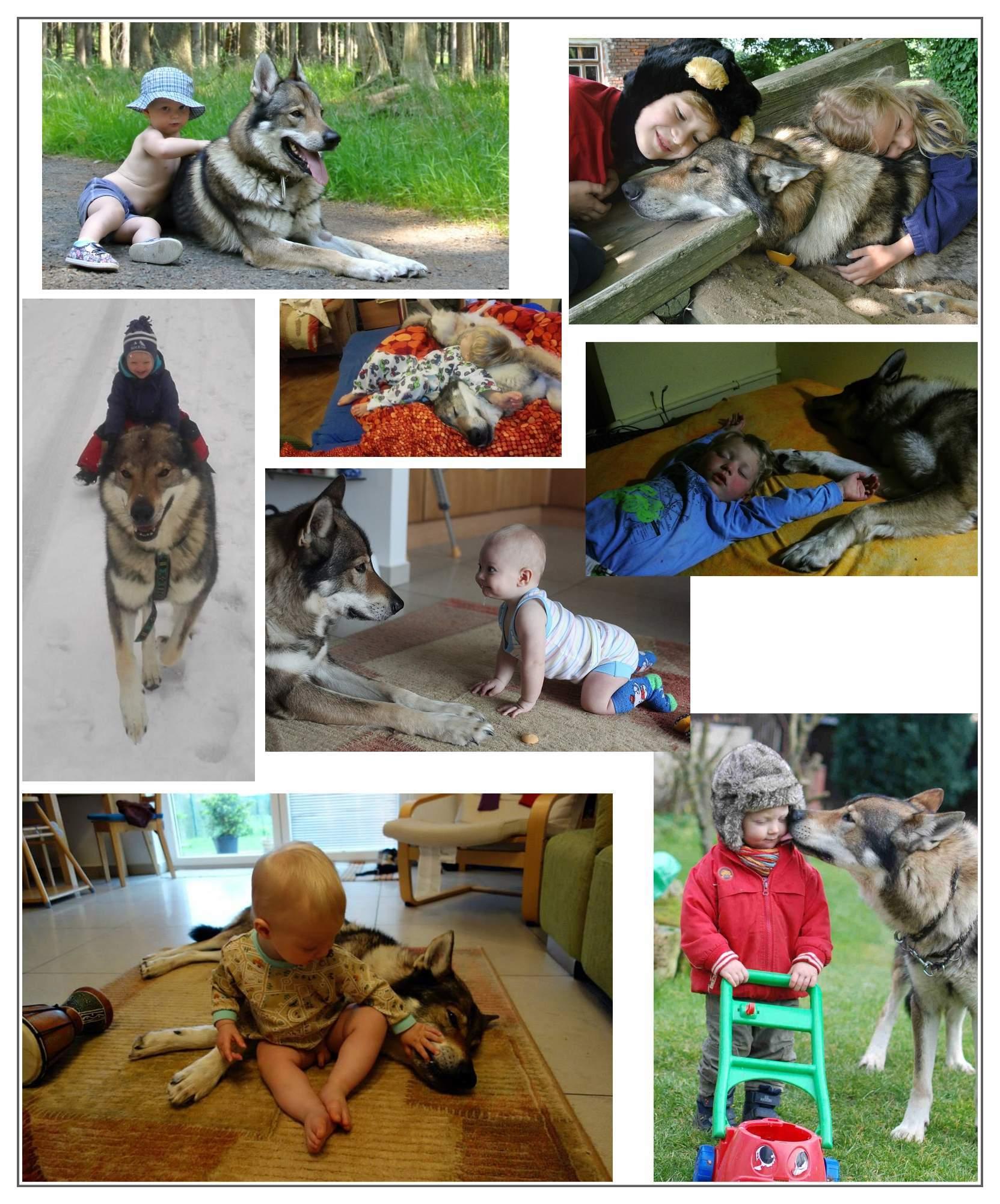 http://img24.rajce.idnes.cz/d2401/13/13140/13140815_c27656f67912f3dbf32c02b80e85ee75/images/rodinnpes.jpg?ver=0