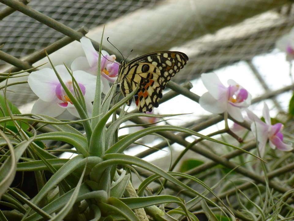 Exotičtí motýli volně poletují mezi lidmi a orchidejemi. FOTO: Kristýna Hortvíková