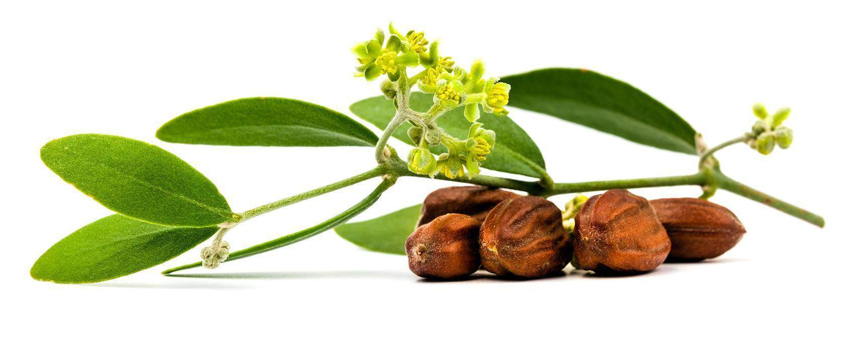 Just Jojoba