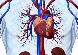 Cévní systém