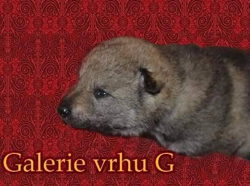 http://sdivokoukrvi.rajce.idnes.cz/G_s_Divokou_krvi/
