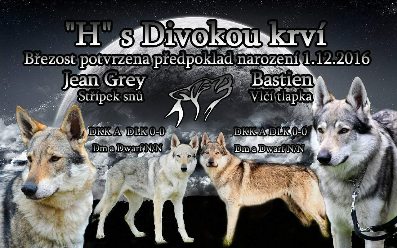 http://img24.rajce.idnes.cz/d2403/13/13079/13079198_1dc734c50e5b51a041ca3b3e5750cca2/images/plakatekHkrv.jpg?ver=2