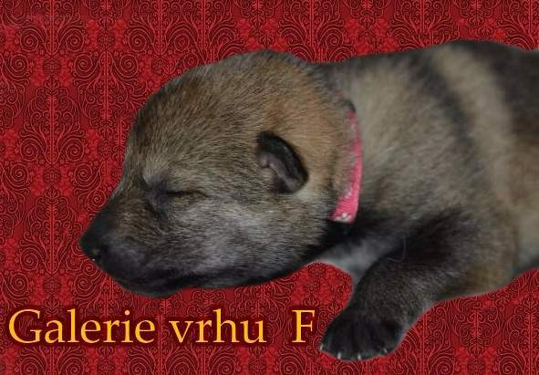 http://sdivokoukrvi.rajce.idnes.cz/F_s_Divokou_krvi/