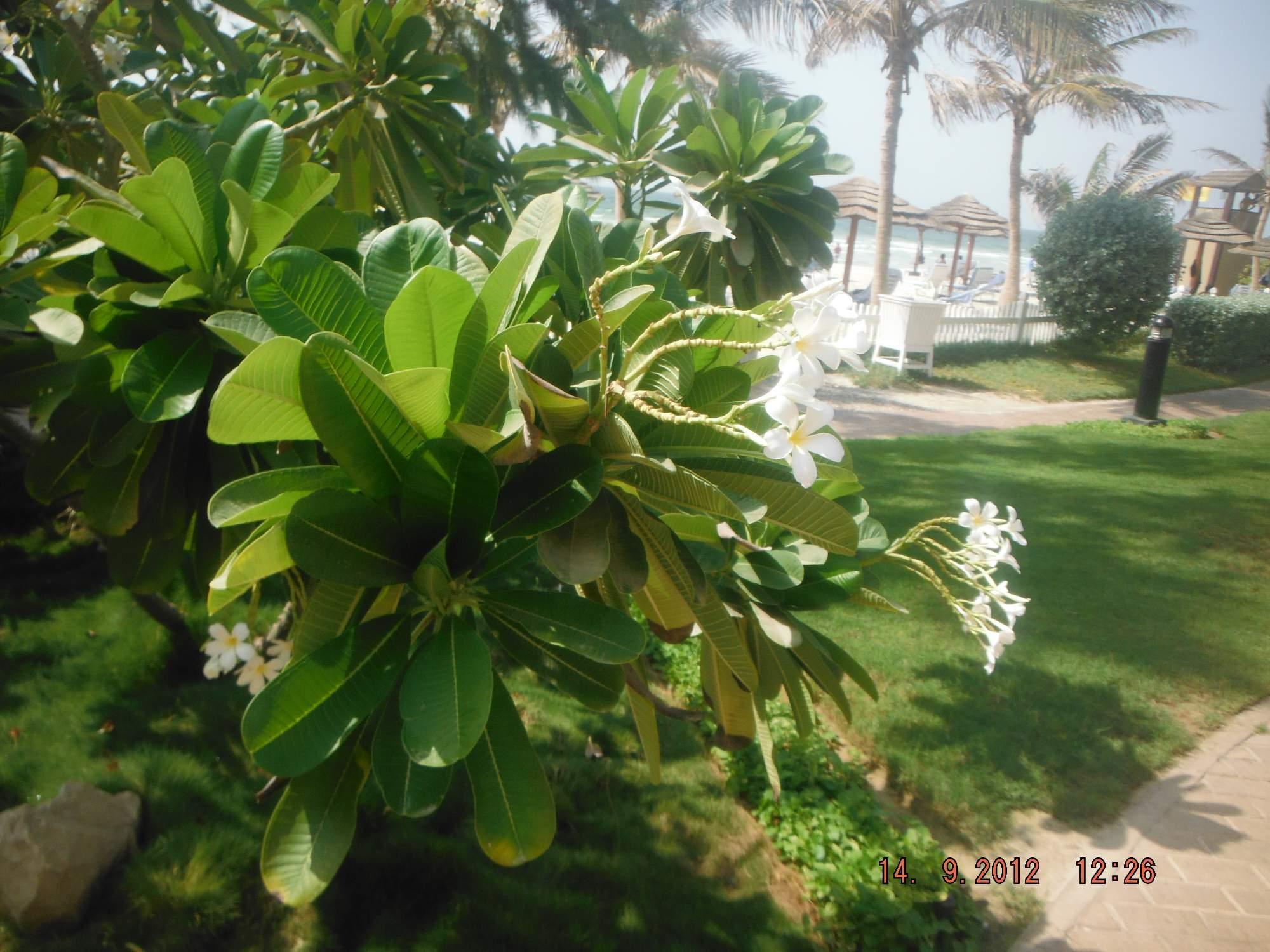 http://img24.rajce.idnes.cz/d2403/13/13214/13214242_a1e43f49e51a1daa7632f800d4edae3f/images/SAE212.jpg