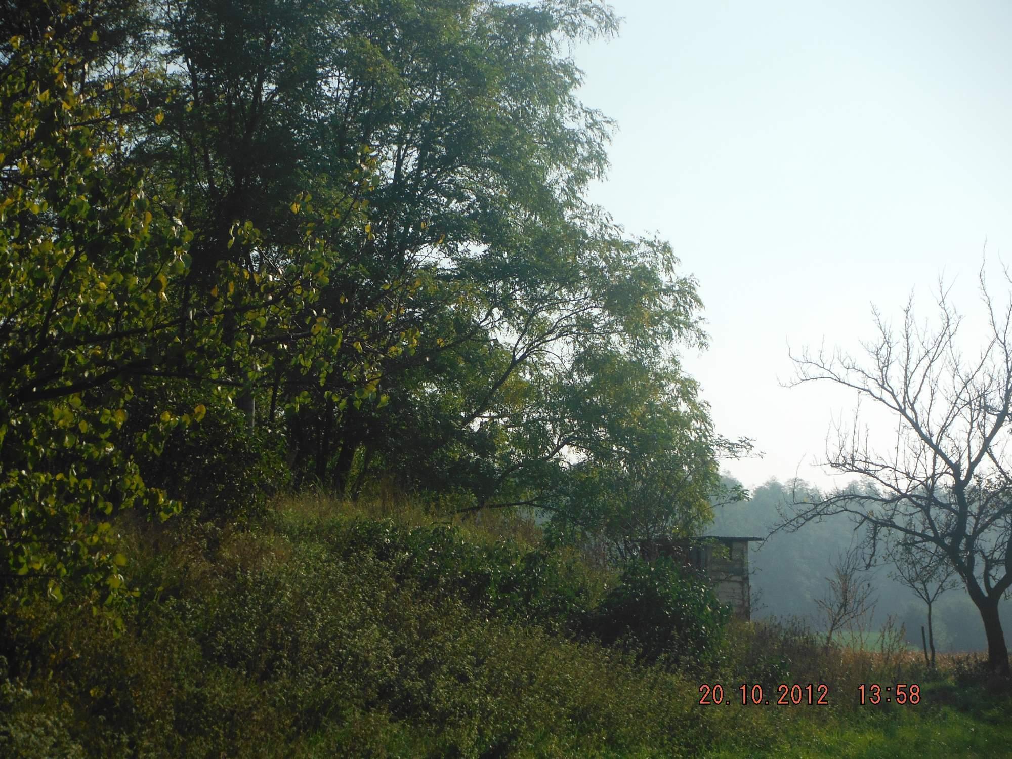 http://img24.rajce.idnes.cz/d2403/13/13214/13214242_a1e43f49e51a1daa7632f800d4edae3f/images/SAE626.jpg
