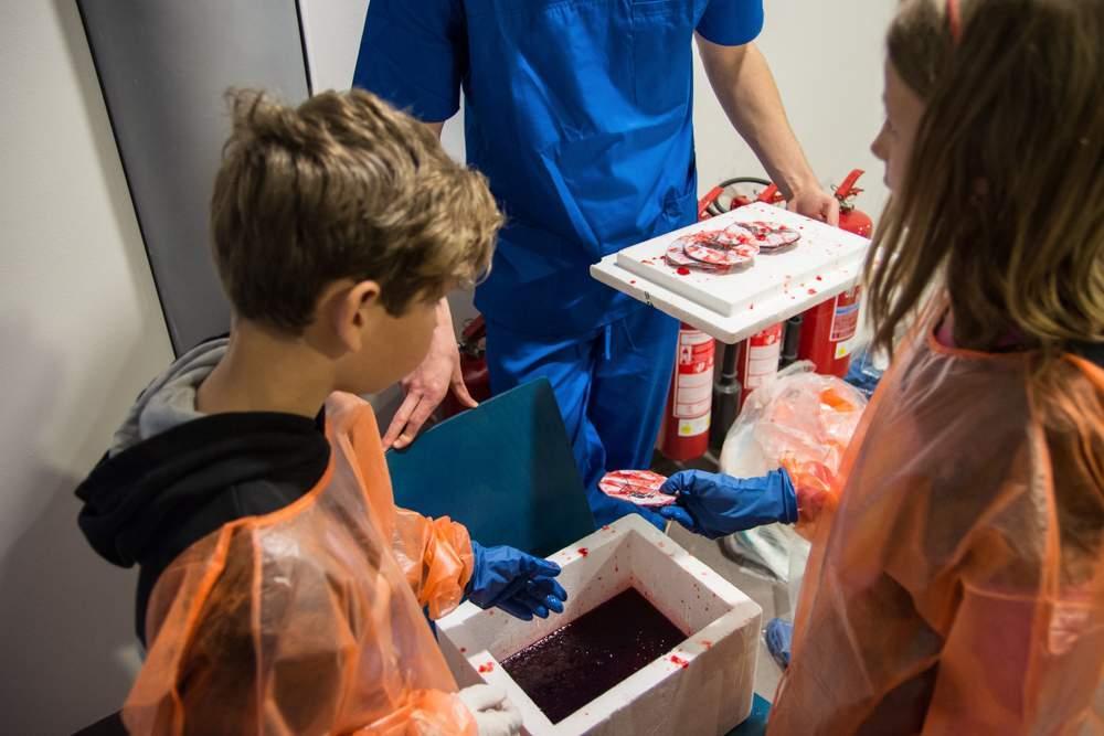 V tekutině připomínající krev hledali odvážlivci obrázky zvířat, která přenášejí infekční onemocnění. Foto: Markéta Sulková