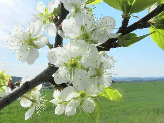 krásný jaro