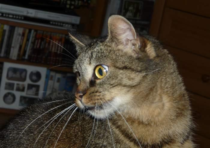 Beauyiful kočička
